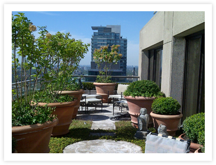 Rooftop Terrace Irration company Toronto